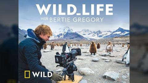 Stream And Watch Nat Geo Wild Online | Sling TV